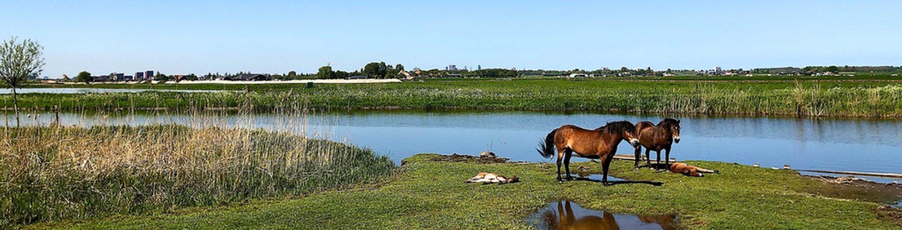 Waterhardheid in Zoetermeer