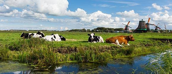 Boshuis - Zakelijke sector veehouderij
